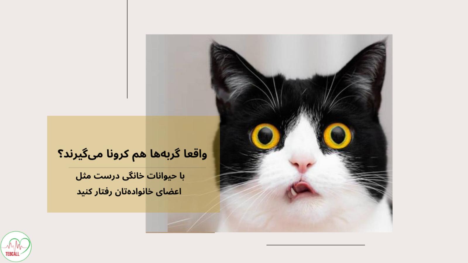 واقعا گربه ها هم کرونا می گیرند؟